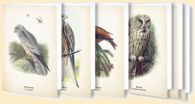 Kunstklappkarten Ornis
