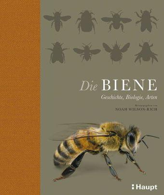 Noah Wilson-Rich: Die Biene