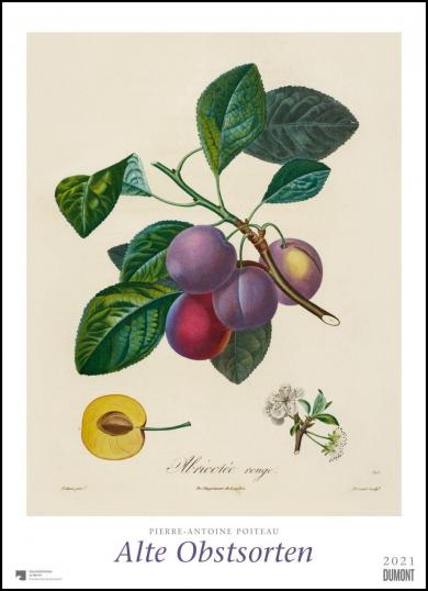 Pierre Antoine Poiteau: Pierre Antoine Poiteau: Alte Obstsorten 2021 - DUMONT Kunst-Kalender - Poster-Format 49,5 x 68,5 cm